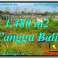 Exotic PROPERTY 1,480 m2 LAND FOR SALE IN CANGGU BALI TJCG212